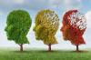 Ravintovalmiste voi hidastaa Alzheimeria – jos potilaalla on siihen varaa